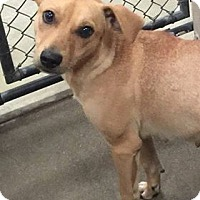 Adopt A Pet :: LaRue - Hopkinton, MA