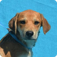 Adopt A Pet :: **DESTIN** MEET NOV 19TH! - Mukwonago, WI