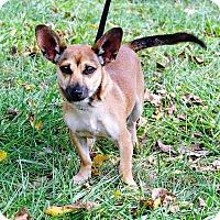 Adopt A Pet :: Jack - Parsons, KS