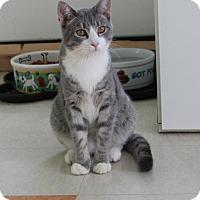 Adopt A Pet :: Blue 33383642 - Westampton, NJ