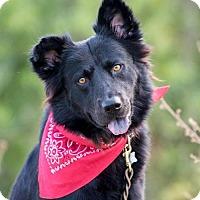 Adopt A Pet :: Marrok - Bradenton, FL
