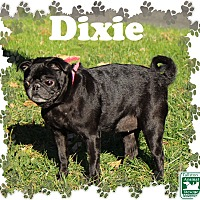 Adopt A Pet :: Dixie - Fallston, MD