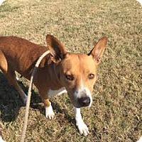 Adopt A Pet :: Sally - Dallas, TX