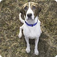 Adopt A Pet :: Eric - Gadsden, AL