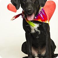 Adopt A Pet :: Asher - Baton Rouge, LA