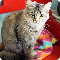 Adopt A Pet :: Tuna - Norman, OK