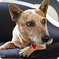Adopt A Pet :: Reba! Once in a lifetime dog! - Los Angeles, CA