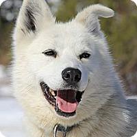 Adopt A Pet :: Mane - Jefferson, NH