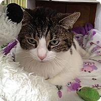 Adopt A Pet :: Emma - Island Park, NY