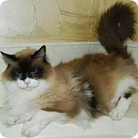 Adopt A Pet :: Vegas - Ennis, TX