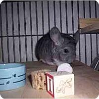 Adopt A Pet :: Pierson - Avondale, LA