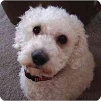 Adopt A Pet :: Randy the Rascal - La Costa, CA