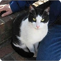 Adopt A Pet :: Whiskers - Little Falls, NJ
