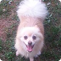 Adopt A Pet :: Fancy - Russellville, KY
