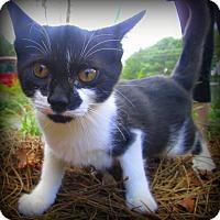 Adopt A Pet :: Missy - Gadsden, AL