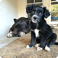 Adopt A Pet :: Tink Tink - Van Nuys, CA