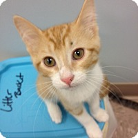 Adopt A Pet :: George - Byron Center, MI