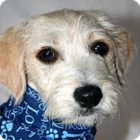 Adopt A Pet :: Shiloh - Cotati, CA