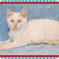 Adopt A Pet :: Tusker - Mt. Prospect, IL