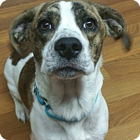 Adopt A Pet :: Louie - Lisbon, OH