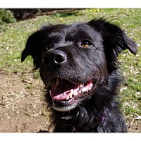 Border Collie Mix Dog for adoption in Tempe, Arizona - Abby
