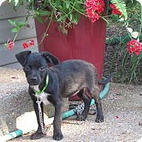 Adopt A Pet :: FERN - Hartford, CT