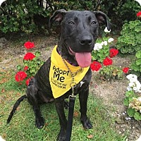 Adopt A Pet :: Norah-Pending! - Detroit, MI