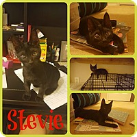 Adopt A Pet :: Stevie - Ft Worth, TX