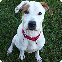 Hound (Unknown Type) Mix Dog for adoption in Valparaiso, Indiana - Arya