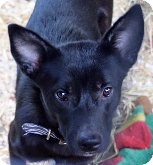 Border Collie/Shepherd (Unknown Type) Mix Dog for adoption in LEXINGTON, Kentucky - GRANDSTAND