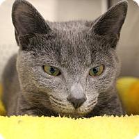 Adopt A Pet :: Melinda - Sarasota, FL
