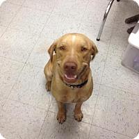 Adopt A Pet :: Deliah - Olympia, WA