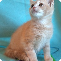 Adopt A Pet :: Phil - Spring Valley, NY