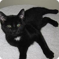 Adopt A Pet :: Frisky - Gary, IN