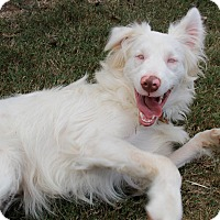 Adopt A Pet :: Zonder - Knoxville, TN