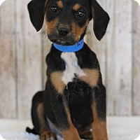 Adopt A Pet :: Benny - Waldorf, MD