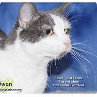 Adopt A Pet :: Gwen - South Bend, IN