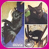 Adopt A Pet :: OLIVIA - Malvern, AR