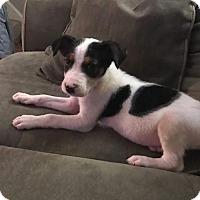 Adopt A Pet :: Hardy - Tonawanda, NY