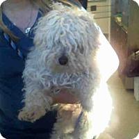 Adopt A Pet :: DUESY - San Martin, CA