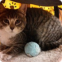 Adopt A Pet :: Baby - Cranford/Rartian, NJ