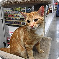 Adopt A Pet :: Nohea - Warminster, PA