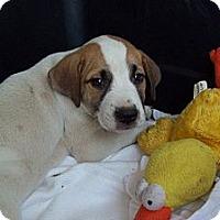Adopt A Pet :: DENVER - Glastonbury, CT