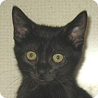 Adopt A Pet :: CEDAR-2012 - Hamilton, NJ