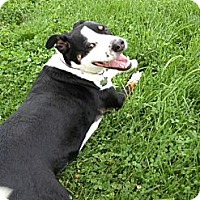 Adopt A Pet :: Special - Midway, KY