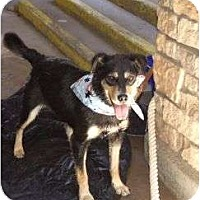 Adopt A Pet :: Luna - Golden, CO