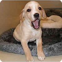Adopt A Pet :: Miracle - Cumming, GA