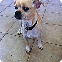 Adopt A Pet :: Goober - Shelton, WA