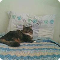 Adopt A Pet :: Stanze - Lyndora, PA