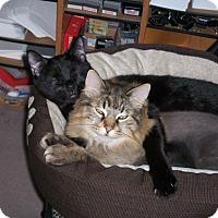 Adopt A Pet :: Bailey-Caden - Laguna Woods, CA